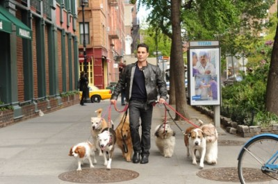 Dogs in the City CBS TV show