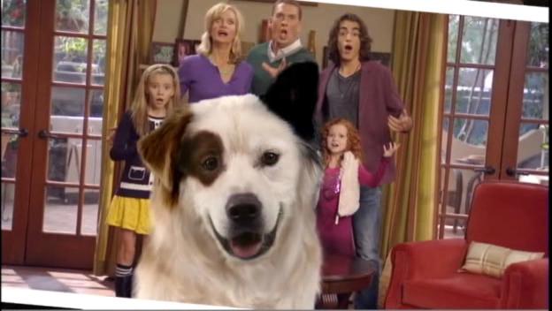 Dog with a Blog: Season Two | 624 x 352 jpeg 193kB