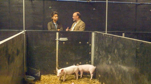 Photo: Transgenic pig at the Roslin Institute. (Courtesy of HBO)