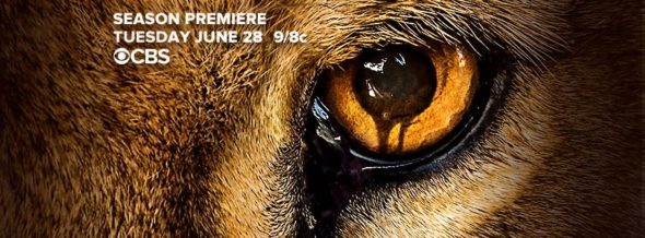 Zoo TV show on CBS: ratings (cancel or renew for season 3?)