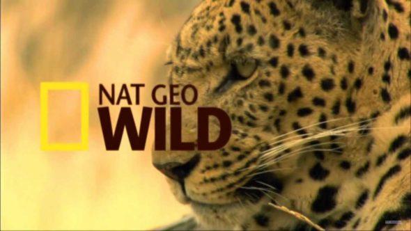 Animal ER Live: Mark Steines (Home & Family) Returns to TV
