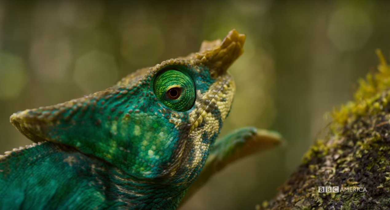 Planet Earth II: BBC America Event Series Delayed ...