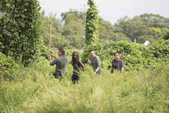 The Walking Dead TV show on AMC: season 7 (canceled or renewed?)