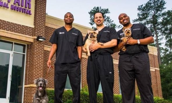 The Vet Life TV show on Animal Planet: (canceled or renewed?)