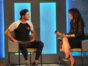 Big Brother Celebrity Edition TV Show: canceled or renewed?