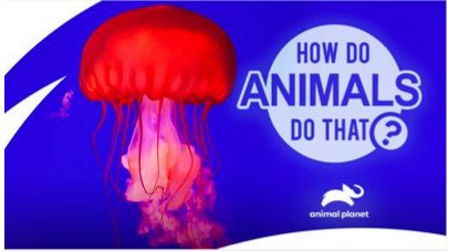 How Do Animals Do That? TV show on Animal Planet: (canceled or renewed?)