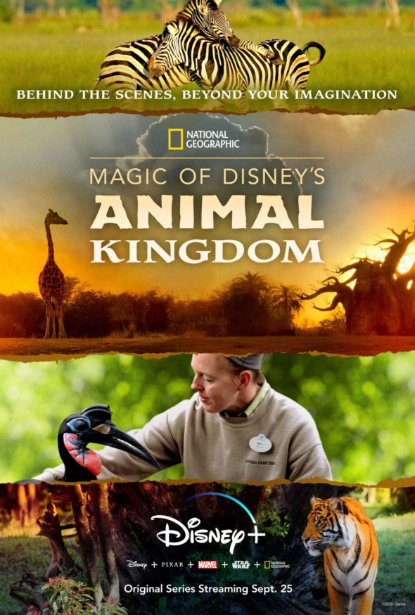Magic of Disney's Animal Kingdom TV Show on Disney +: canceled or renewed?